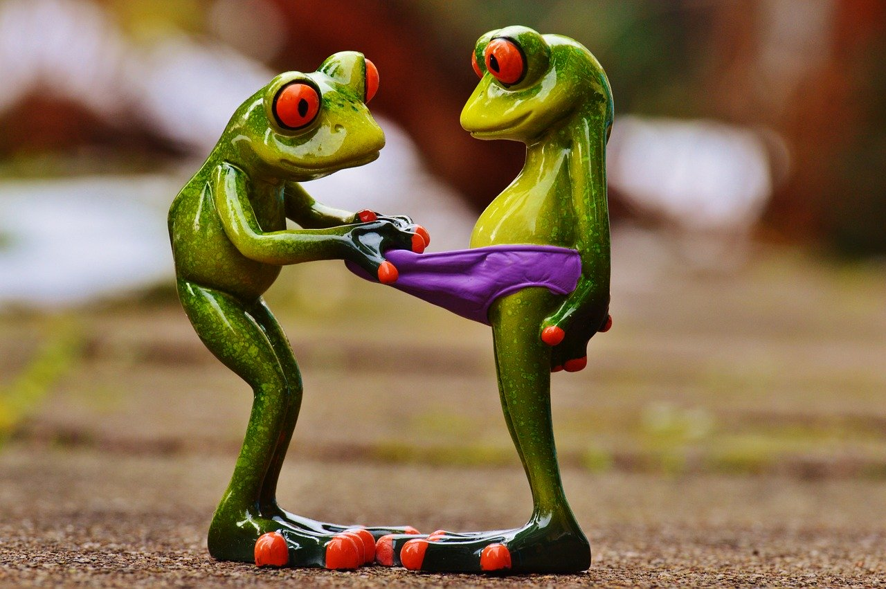 frogs, curious, funny